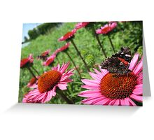 Monarch Butterfly Respite Greeting Card