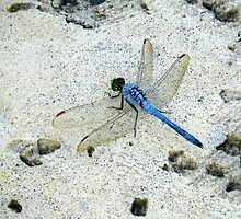 Blue Dragonfly by Caren Grant