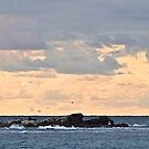 Seabirds coming in to roost for the night. Apollo Bay. by johnrf