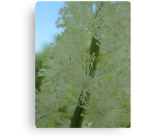 Bottle Brush White Flower Canvas Print