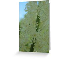 Bottle Brush White Flower Greeting Card