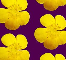 Yellow Buttercup by appfoto