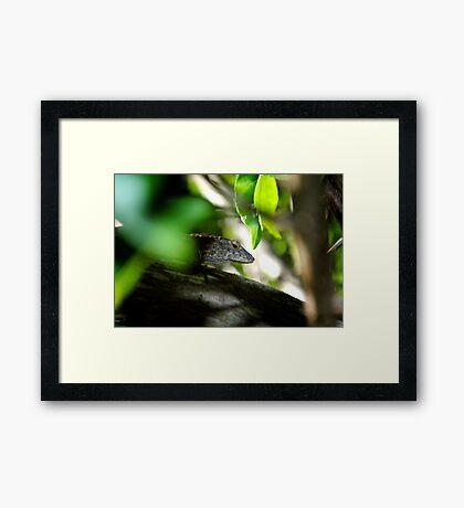 Sly! Framed Print