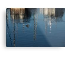 Young Red-Necked Grebe on Silver Metal Print