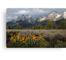 Grand Teton & Mule's Ears Canvas Print