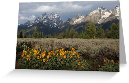 Grand Teton & Mule's Ears by A.M. Ruttle