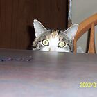 Callico Kitty peering over table by lvitup