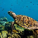 Sea Turtle on Bonaire's Reef by Rick Grundy