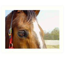 Horse Eye Face Reflections Art Print