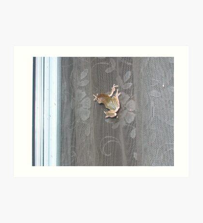 Tree Frog on the Window Screen Art Print