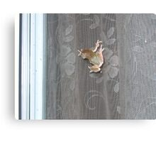 Tree Frog on the Window Screen Canvas Print