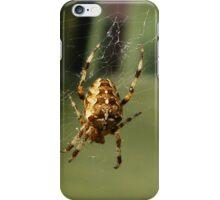 Garden Spider in Web iPhone Case/Skin