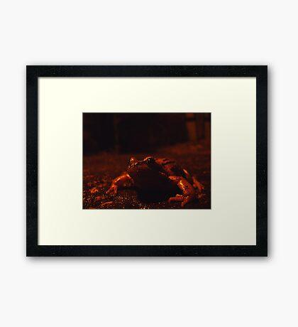 frog at large Framed Print
