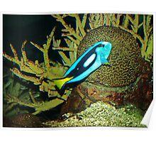 Underwater world 3 Poster