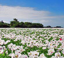 Opium......... by Adri  Padmos