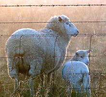 Ewe are my little lamb!! by Julie Sleeman