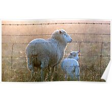 Ewe are my little lamb!! Poster