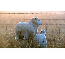 Ewe are my little lamb!! Photographic Print