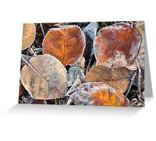 Frosty Leaves 1 - Bellarine Peninsula Greeting Card
