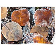 Frosty Leaves 1 - Bellarine Peninsula Poster