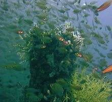 Fish paint my Heaven! by NICK COBURN PHILLIPS