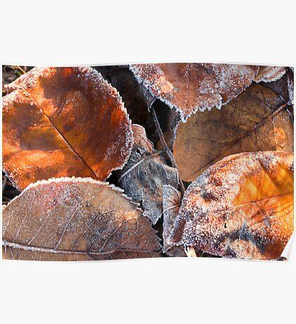 Frosty Leaves 2 - Bellarine Peninsula Poster