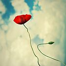 Balloon poppy by Suzana Ristic