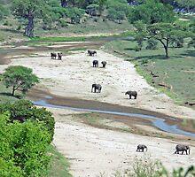 Elephant Heaven. Tarangire River, Tanzania by Adrian Paul