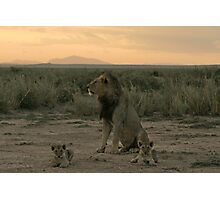 Male lion and cubs Photographic Print
