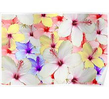 HIBISCUS CARD Poster