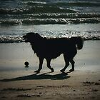 One More Game of Fetch Before the Sun Goes Down by JonDavis33