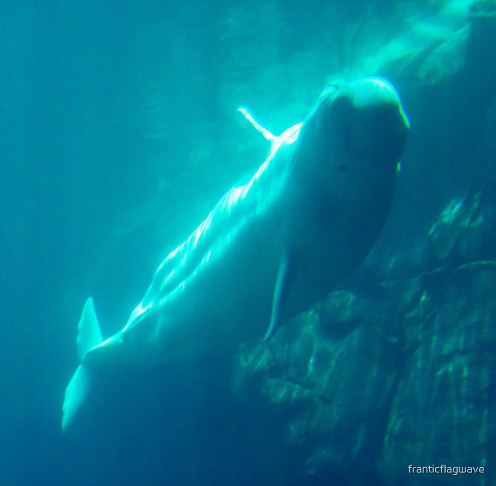"""Beluga Whale"" by franticflagwave"