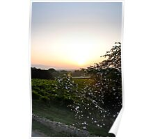sunrise with white flowers in the foreground Poster