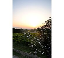 sunrise with white flowers in the foreground Photographic Print