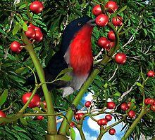 The Mistletoebird by Ken Gilliland