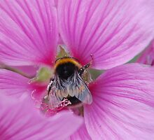 Be on a flower by Andy  Hall