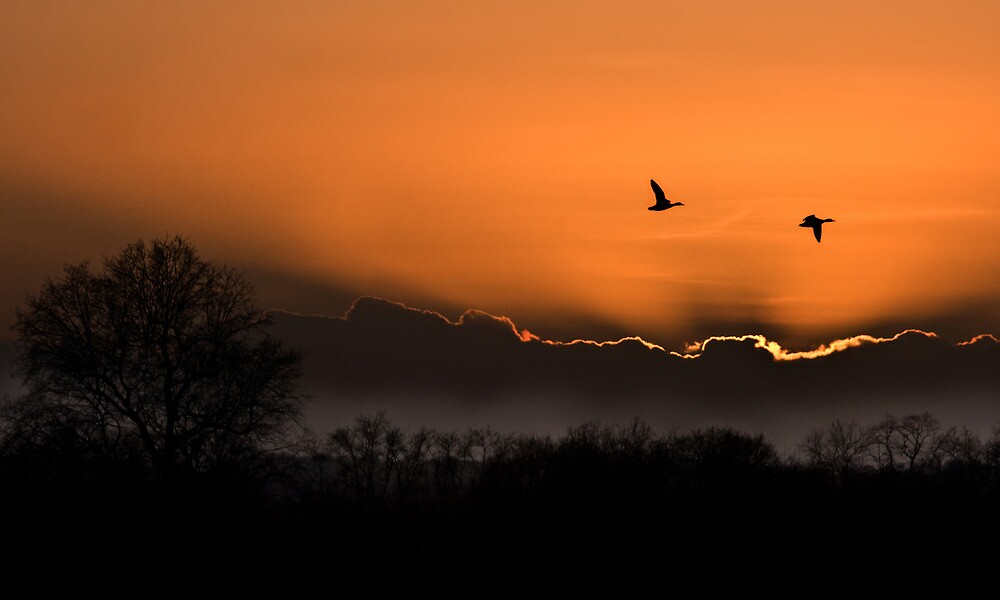 Flying Home by Rachael Talibart