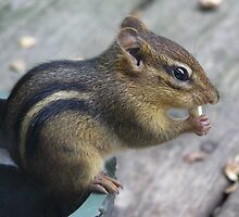 Munchkin the Chipmunk by CarolD