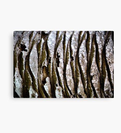 Palm Bark Boogie Canvas Print
