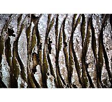 Palm Bark Boogie Photographic Print