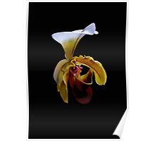 Orchid in Black 1 Poster