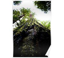 Sequoia Up Close Poster