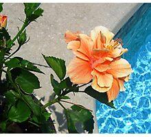 Sun & Water: Desire Fulfilled Photographic Print