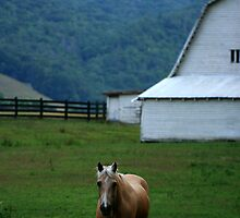 Valle Crucis Countryside by jstoeber