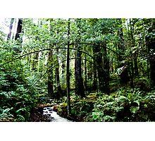 Creek - Sequoia National Park Photographic Print