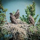 Eagle Nest by Yukondick