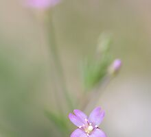 Pink promise by Mandy Disher