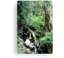 Boding Brook Canvas Print