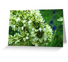 Colorado Wildflowers - Colorado False Hellebore Greeting Card