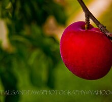 RED nectarine by Petalsandpaws
